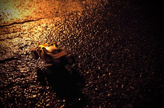 皇帝in夜の石垣島その2