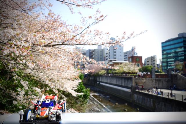 桜と皇帝04