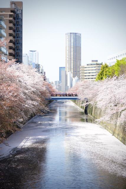 桜と皇帝03