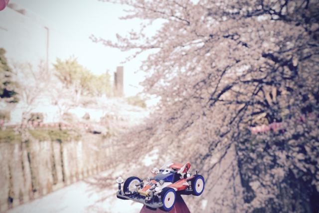 桜と皇帝01