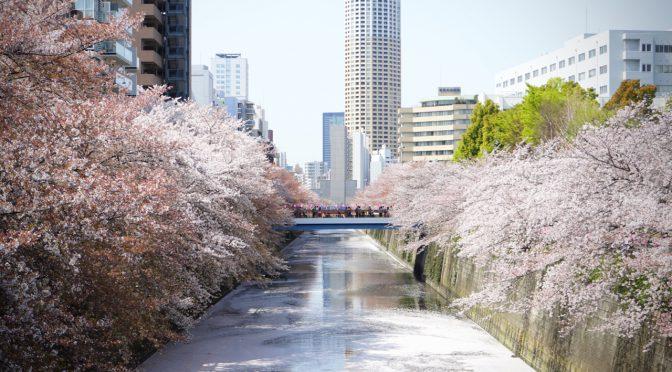 【ミニ四駆百景】桜と皇帝