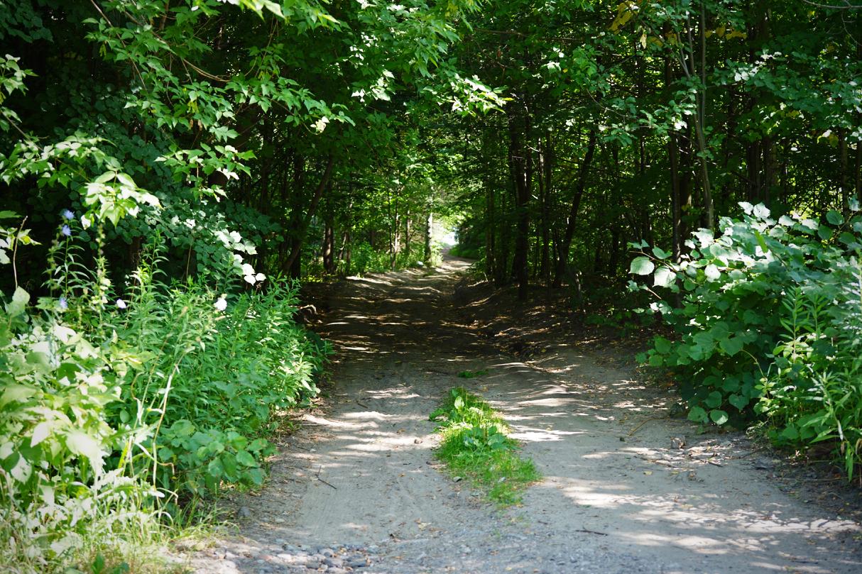 近所の小径の緑のトンネル