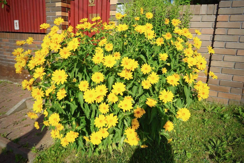 ビャウィストクの花