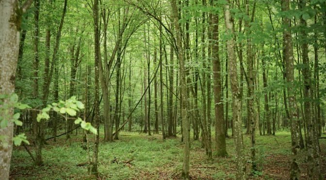 【ミニ四駆百景】ビャウォヴィエジャの森など /Białowieża Forest and so on