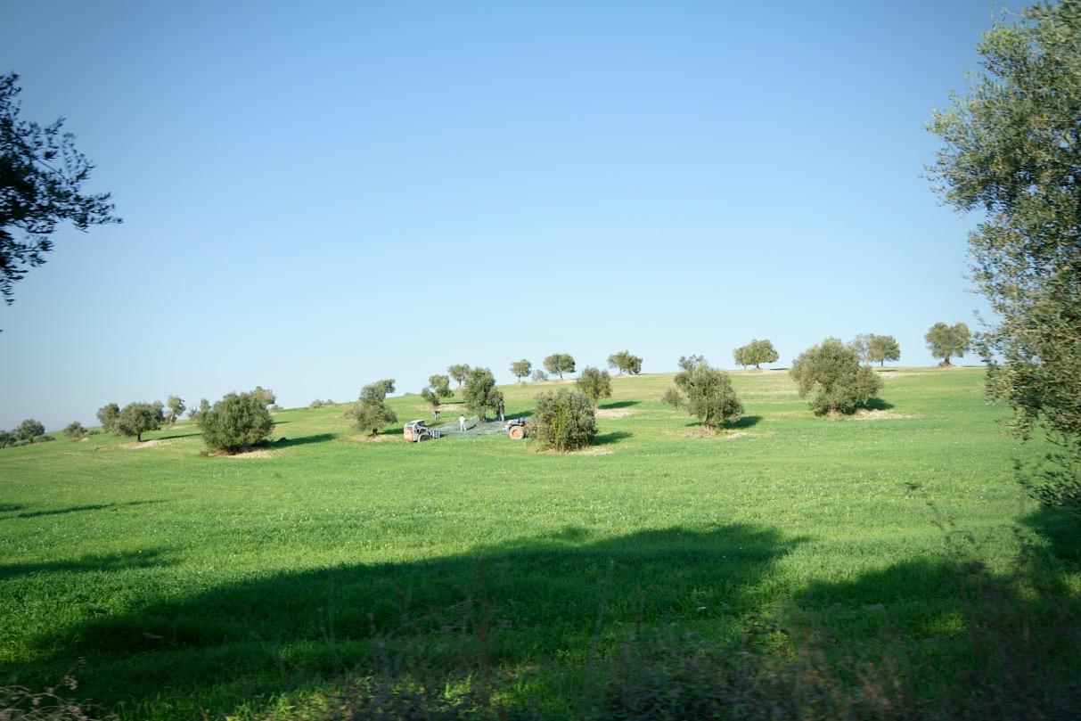 Monterotondo05