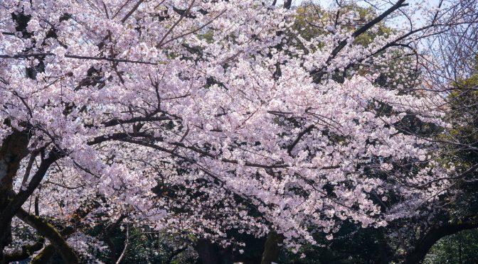 春が来た!/Spring has come!